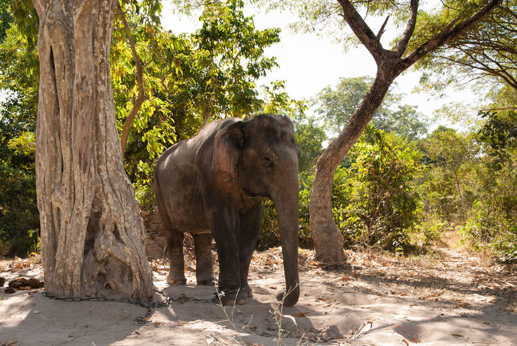 Elephant standing amidst trees in forest
