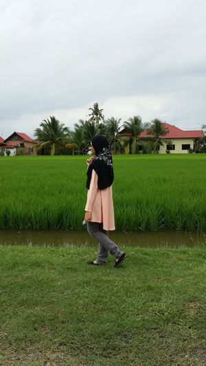The green paddy field is a beautiful sight Tree Men Full Length Agriculture Standing Rice Paddy Field Spraying Sky Grass