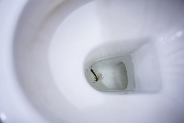 Be careful centipede in toilet Toilet Flush Toilet Centipede One Animal Close-up White Color Indoors  No People Insect Invertebrate Bathroom Animal Wildlife Small Animals In The Wild Nature Protection Security