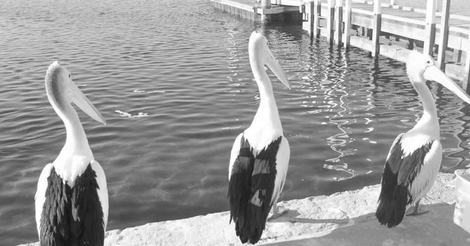 EyeEm Black&white! Blackandwhite Animals Mafia  Enjoying Life Eye4photography