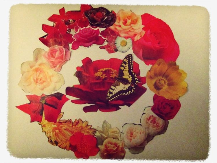 Flowers Butterfly Pic