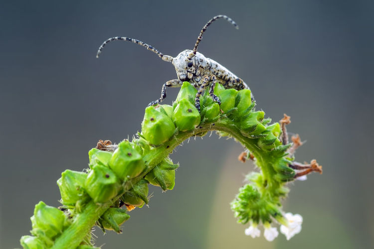 White Longhorn Perching Insect Social Issues Butterfly - Insect Close-up Animal Themes Plant Green Color Magnification Blooming Pest Housefly Animal Antenna Fly Invertebrate Microscope Caterpillar Flower Head Pollen Bud Arthropod In Bloom Ant Fiji Mouse Mosquito Rat Cell Petal Stamen