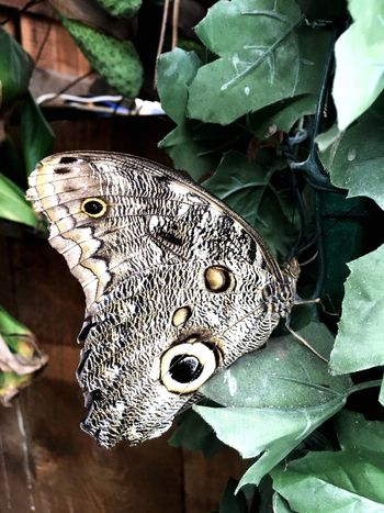 Butterfly Leaf One Animal Animal Themes Animals In The Wild Close-up High Angle View Animal Wildlife Day No People Nature Outdoors