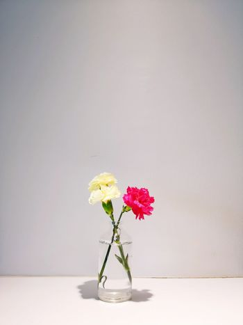 yellow vs red Mobilephotography Huawei P20 Pro Above Light Coffee Shop Yellow And Red Flowers Minimalism Flower Head Flower Peony  Bouquet Studio Shot White Background Vase Petal Close-up Flower Arrangement Mason Jar Blossom