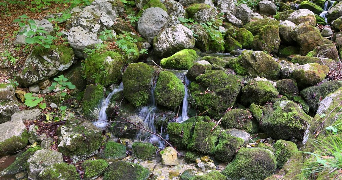 source of pure fresh water in the mountains Alpine Brook Nature Wood Alpi Alps Beauty In Nature Brook Wat Foreset Fresh Water Mountain Mountains Outdoors Outdoors Photograpghy  Rock - Object Source Source Of Water Spring Stream Stream Water Water