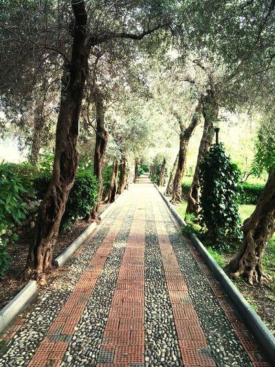 Taormina Evening taormina gardens, siciili Siciili