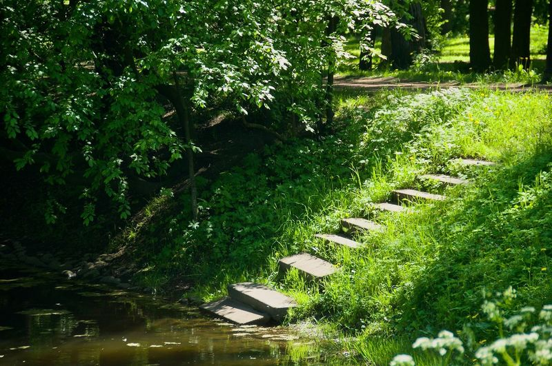 Grass Park Lake River Green Green Color Stone Steps Tree Water Leaf Grass Green Color Greenery Flora Grassland