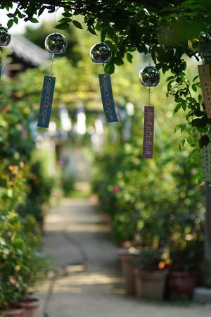 In A Row Lighting Equipment Hanging No People Tree Lantern Plant Outdoors Day Nature Close-up Nara Spirituality EyeEm EyeEm Best Shots Japan 風鈴 おふさ観音 Green Color Beauty In Nature Place Of Worship Focus On Foreground