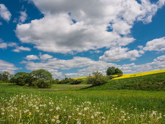 Landscape in Thuringia, Germany. Agriculture Beauty In Nature Cloud - Sky Day Field Flower Grass Green Color Landscape Lush - Description Mountain Nature No People Outdoors Plant Rural Scene Scenics Sky Social Issues Springtime Thuringia Tranquil Scene Travel Destinations Tree
