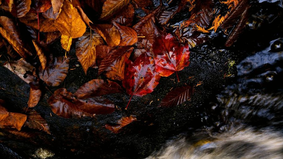 Yup, everywhere I stare these days, I find beauty.... ❤hiking and nature Full Frame Backgrounds No People Outdoors Day Close-up Nature Beauty In Nature Leaf Fall Leafs Canada Reflection Stream Creek Deep Woods St EyeEmNewHere Perspectives On Nature
