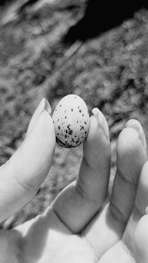 Rest in piece little bird.. 😞 Bird Little Sony Z1 Compact Black And White OpenEdit
