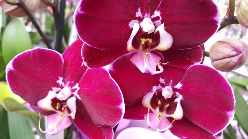 Orchid Nature Plant Close-up Art Photography Scenics Beauty In Nature Art Is Everywhere Card Design Growth Flower Head Blooming Freshness Fragility Focus On Foreground Pink Color Day No People Things Around Me Decorative Light And Shadow Indoor Design Indoors  Blossom Garden Center