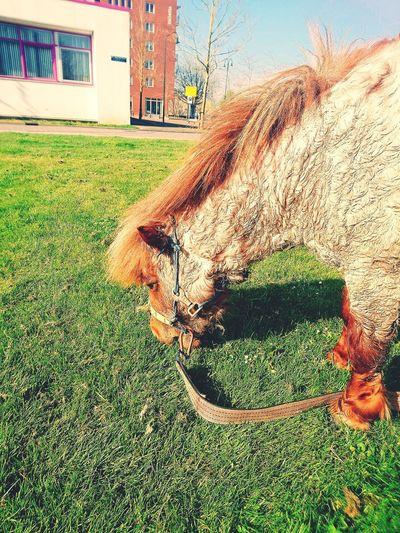 A little Horse breakfast Horse Life