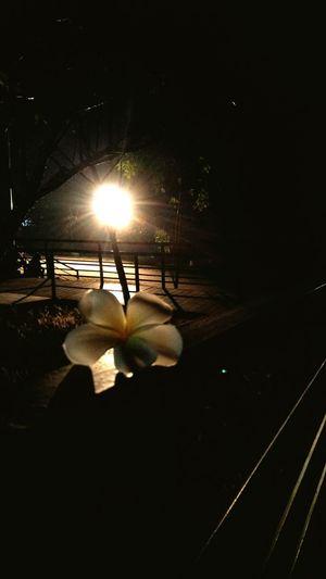 Frower White Relaxing Tree Art Illuminated Light Beam Stage Light