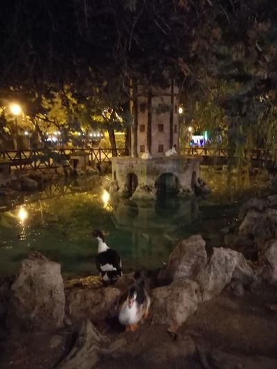 La Glorieta en Alcoy Nature Alcoy Christmas Holiday - Event Green Color Illuminated Night Nature Social Issues Tranquility