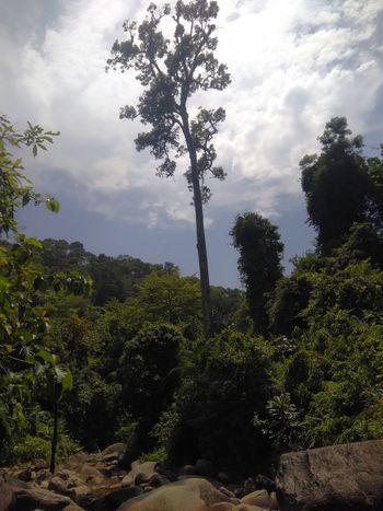 One tree is higher than one. Tree Fruit Sky Cloud - Sky Cultivated Land Tree Area Terraced Field Oilseed Rape Crop  Tea Crop Woods Patchwork Landscape Plowed Field Ear Of Wheat Orange Tree