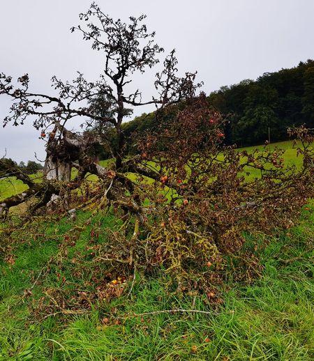Tree Bird Rural