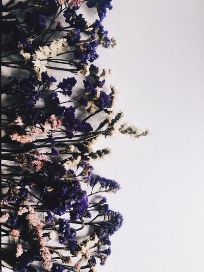 Flower Flat Lay Flower Indoors  No People Nature Close-up Copy Space Purple