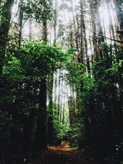 Trees Tall Path Bosque De La Hoja Beauty Sky Light Nature Pretty Green Brown Leave Forest Road Trip Costa Rica