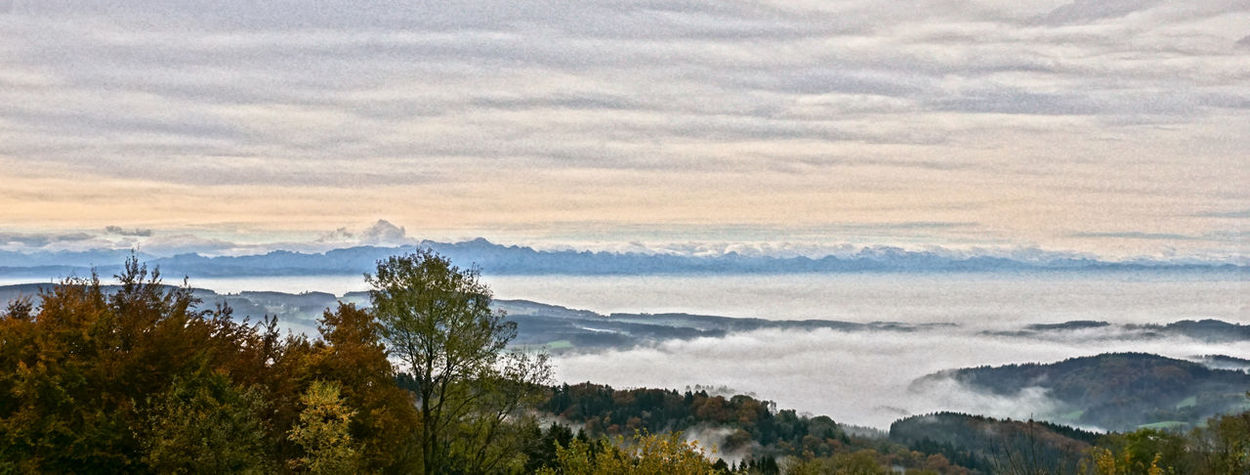 Lake Constance, covered by fog. Alps Autumn Autumn Colors Autumn Leaves Beauty In Nature Cloud Cloud - Sky Fog Foggy Morning Lake Constance Nature Scenics No People Tree Mountain Tranquility Tranquil Scene Sky Landscape Sunset Outdoors Mountain Range Day Water Sea