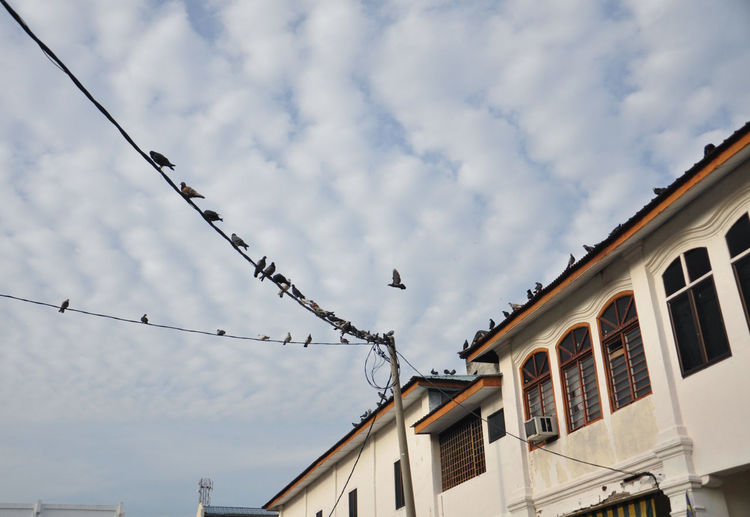 Low angle view of birds perching on cable against sky