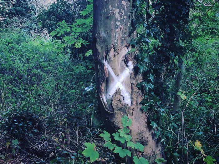 the X Tree