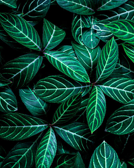 Closeup nature view of tropical leaf background, dark green wallpaper concept.