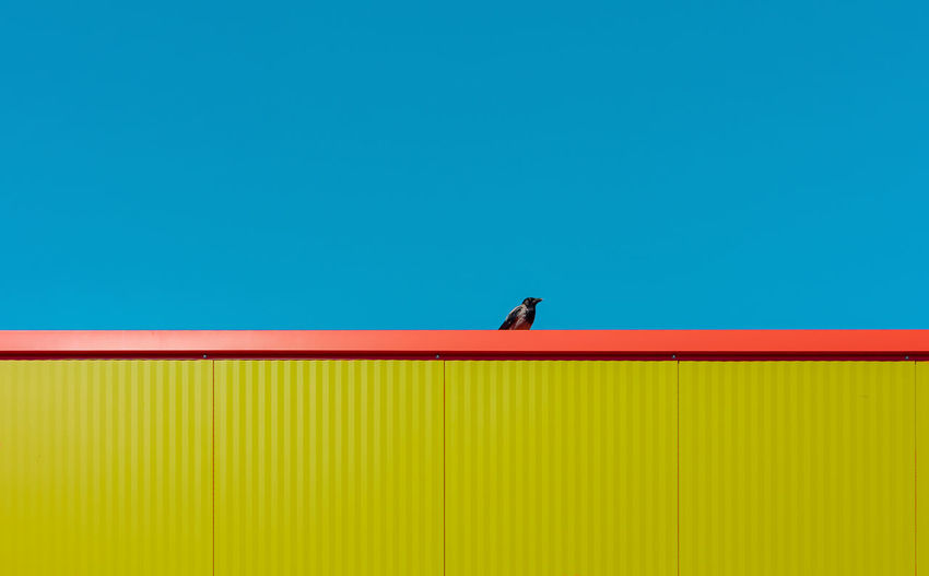 Bird on wall against blue sky
