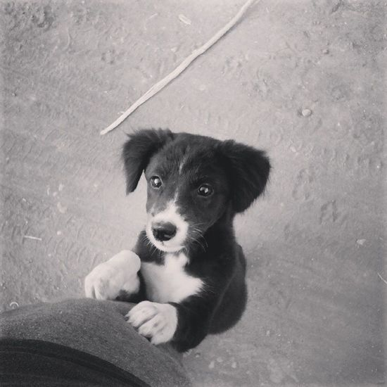 Askin' for sandwich. Tsk Afternoonwalk Puppy Dog Pet