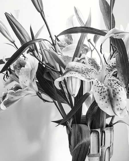 Indoors  No People Nature Day Close-up Composition Still Life Interior Vase Of Flowers Lillies Lily Flowers Flowerporn Fragility Flower Head Bouquet Home Interior Flower Arrangement Monochrome Black & White Petals Interior Design Flower Pollen Beauty In Nature