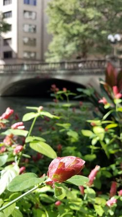 be silent, be still Blurred Background Riverwalk In The Moment In Bloom Blooming