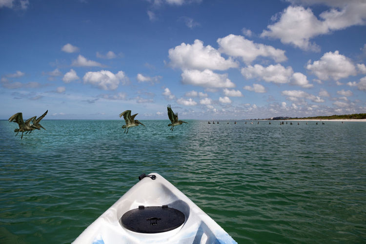 View of birds on sea against sky