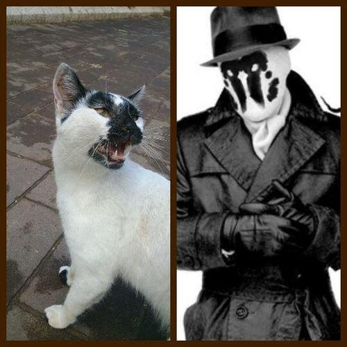 I met the reincarnation of Rorshach! Oo Watchmen Cats Superheroes Fun