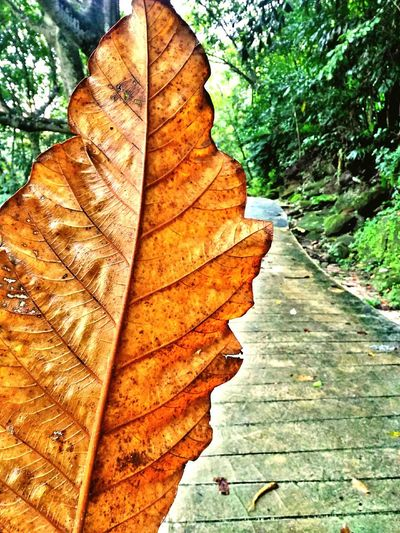Nature Beauty In Nature Maple Leaf Leaves Outdoors Hikingphotography Freshness