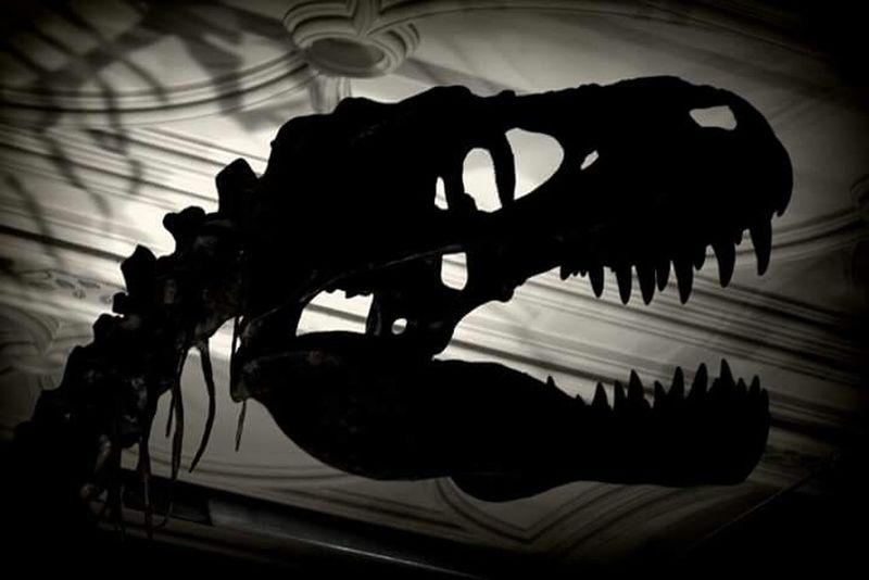 Darkness And Light Nationalhistorymuseum TRex