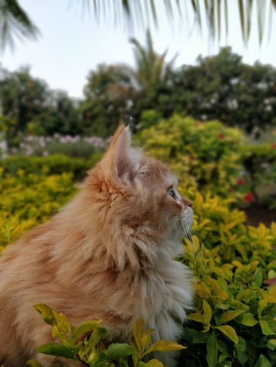 cat looking away Kitty One Animal Animal Themes Mammal Nature Outdoors Pets No People Close-up Beauty In Nature