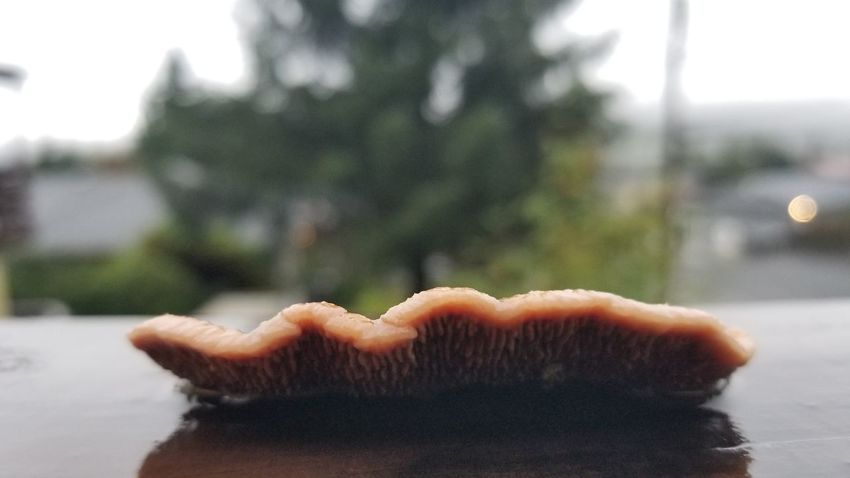 Fungus 🍄 Frontporch Plant Beautiful Place