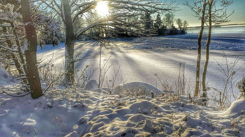 Nature Wonderful View Magic Moments Winter Wonderland Magic Winter From My Point Of View Wintertime
