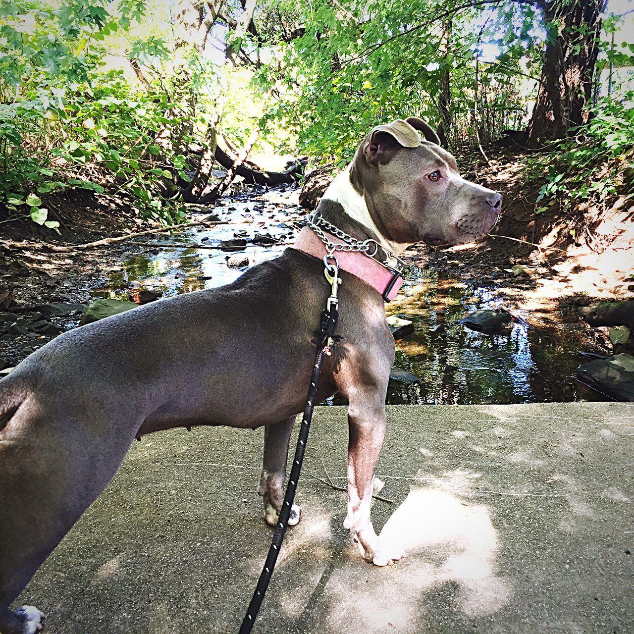 Dog On Wall Against Stream
