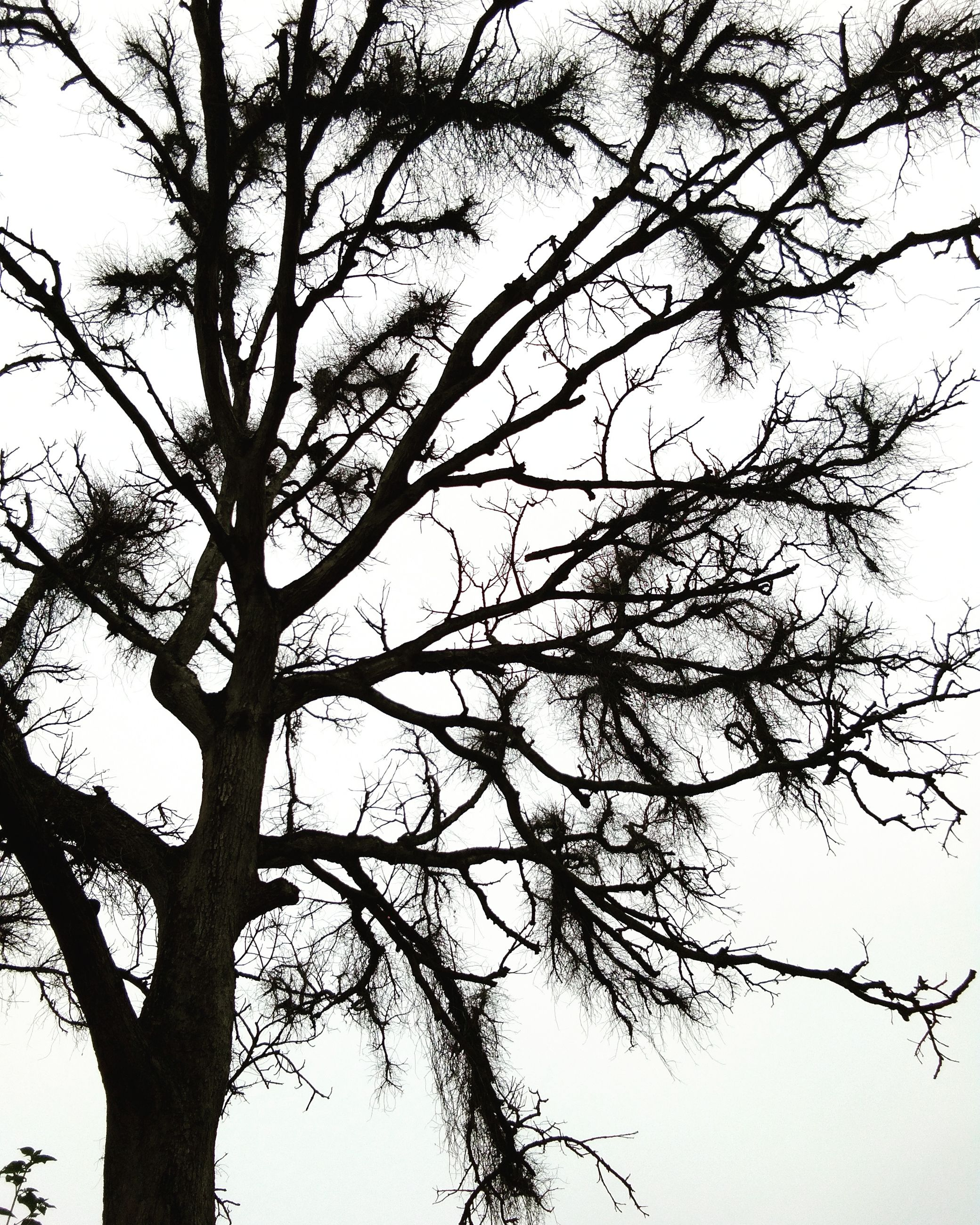 tree, low angle view, nature, branch, no people, sky, growth, beauty in nature, outdoors, day, close-up