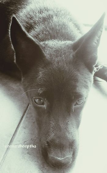 Hello World Blackandwhite BlackDog Reena Ilovemydog Ilovebalidog Dogs Of EyeEm Canggu Bali Bali Dogs