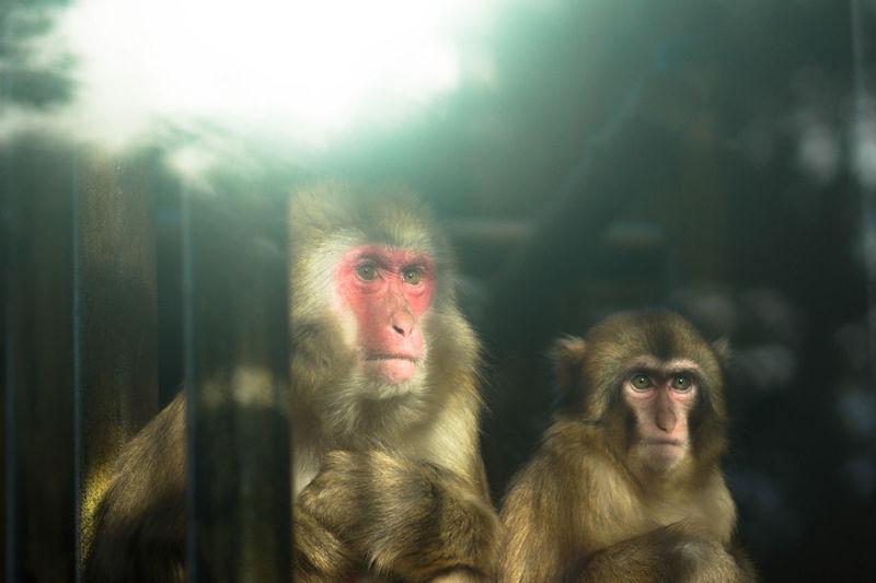 Primate Mammal