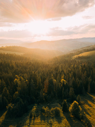 Magic sunset in landscape. spruce trees in the forest during morning sun.