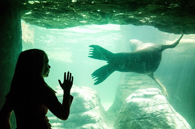Full length of fish swimming in aquarium