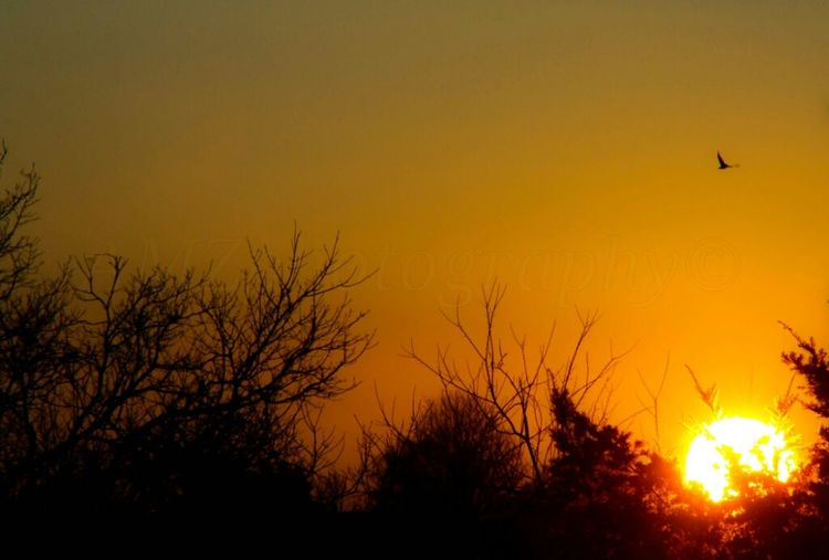 Sunset tonight 1.8.13 300mm Sun Sunset #sunset #sun #clouds #skylovers #sky #nature #beautifulinnature #naturalbeauty #photography #landscape Sun_collection Eye4photography