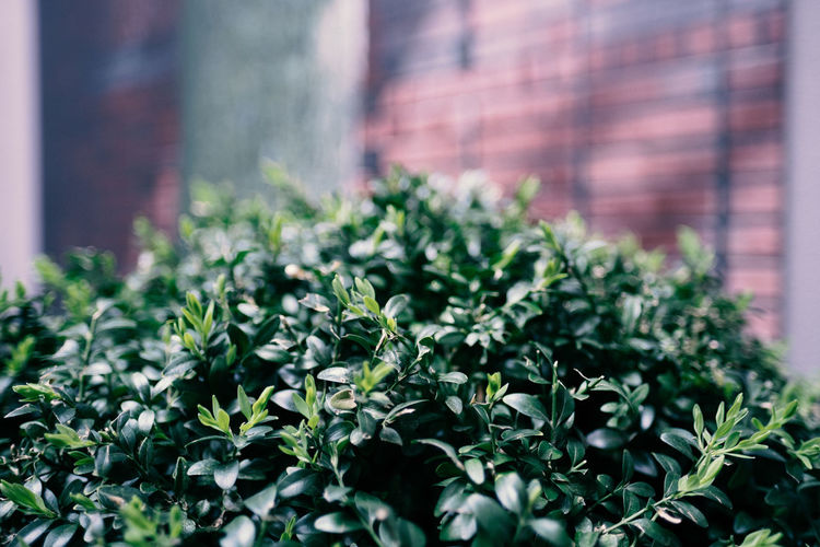 Mostly Green Plant Nature Beauty In Nature No People Freshness Close-up Growth Selective Focus Green Color Plant Part Architecture Leaf Day Built Structure Outdoors Building Exterior Flower Fragility Vulnerability  Brick Herb
