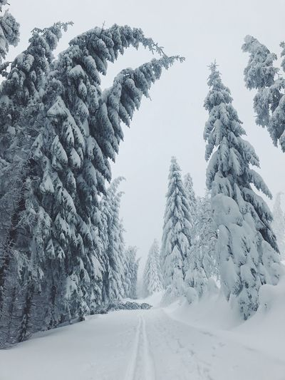 Snow Cold Temperature Winter Tree Forest Nature Beauty In Nature Frozen No People