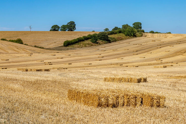 Hay stacks in Sussex fields during harvesting Haystack Industry Rural Agriculture Beauty In Nature Countryside Day Environment Farm Field Harvest Harvesting Hay Land Landscape Nature No People Plant Rural Scene Scenics - Nature Sky Summer Sussex Tranquil Scene Tranquility