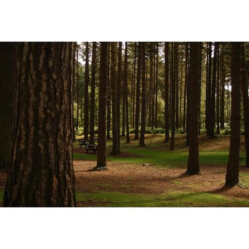 Trees Photgraphy Sherwood Pines green walk adventuretime adventure outside mansfield