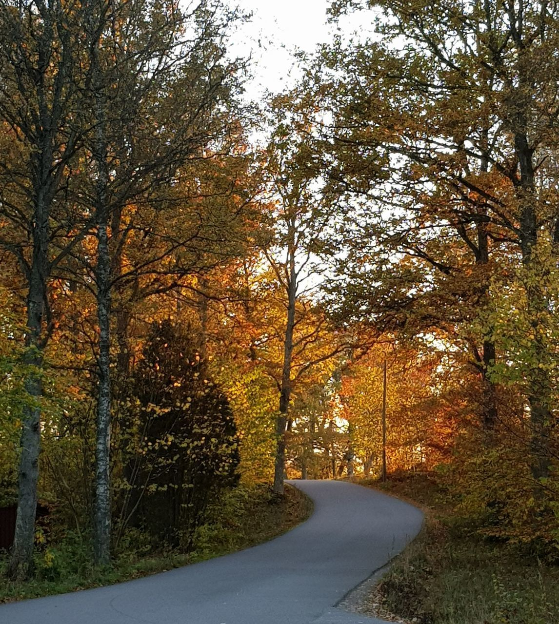 ROAD BY TREES DURING AUTUMN